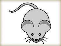 animasi-tikus